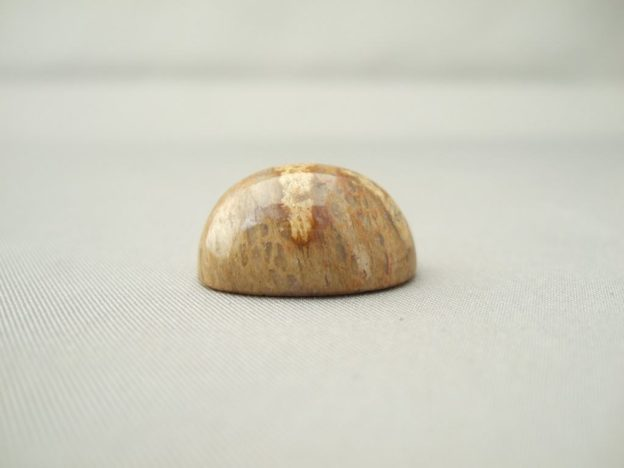 Small Fossilised Dinosaur Bone Cabochon