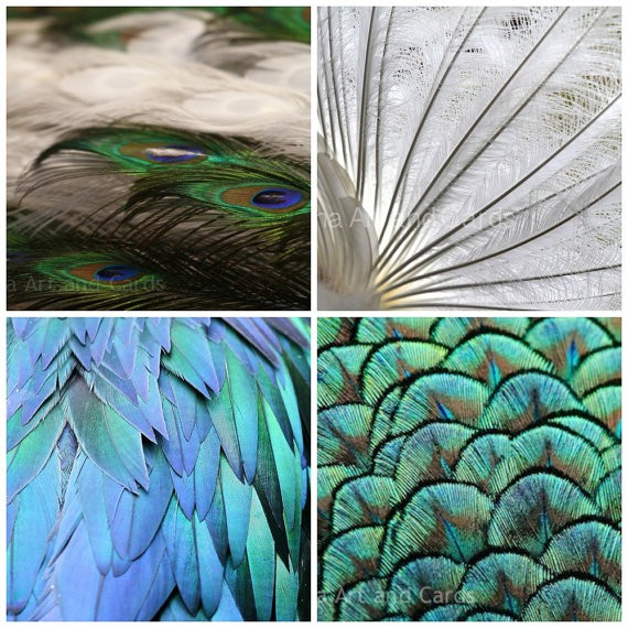 Echidna Art and Cards - Feathers